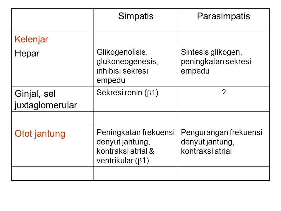 SimpatisParasimpatis Kelenjar Hepar Glikogenolisis, glukoneogenesis, inhibisi sekresi empedu Sintesis glikogen, peningkatan sekresi empedu Ginjal, sel