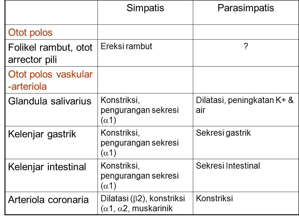 SimpatisParasimpatis Otot polos Folikel rambut, otot arrector pili Ereksi rambut? Otot polos vaskular -arteriola Glandula salivarius Konstriksi, pengu