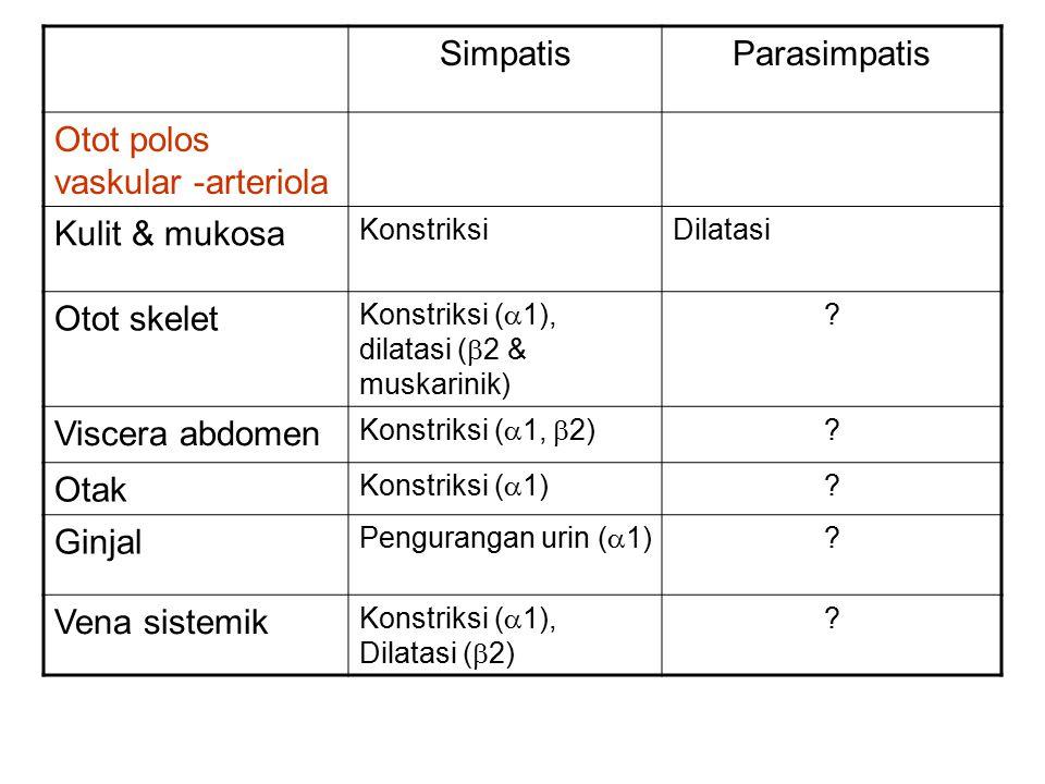 SimpatisParasimpatis Otot polos vaskular -arteriola Kulit & mukosa KonstriksiDilatasi Otot skelet Konstriksi (  1), dilatasi (  2 & muskarinik) ? Vi