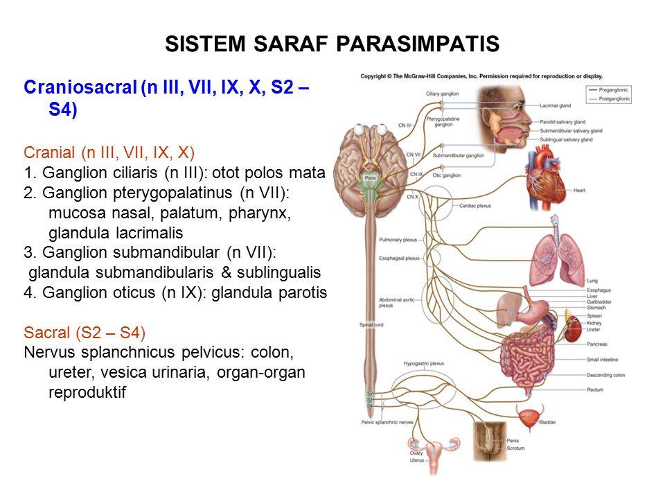 SISTEM SARAF PARASIMPATIS Craniosacral (n III, VII, IX, X, S2 – S4) Cranial (n III, VII, IX, X) 1. Ganglion ciliaris (n III): otot polos mata 2. Gangl