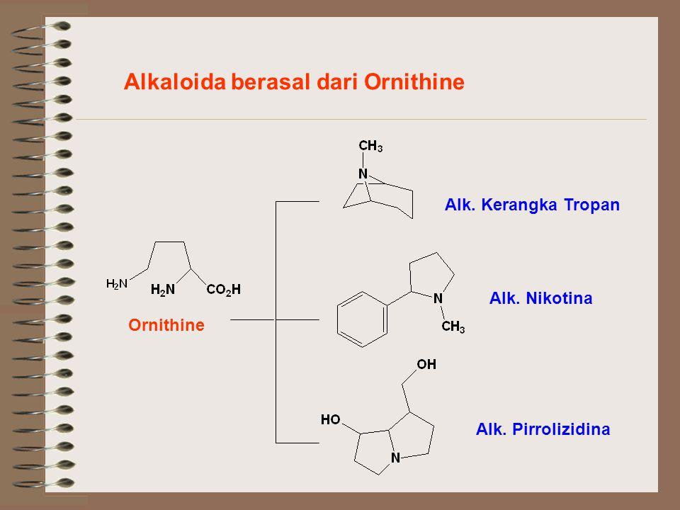 Alkaloida berasal dari Ornithine Alk. Kerangka Tropan Alk. Nikotina Alk. Pirrolizidina Ornithine
