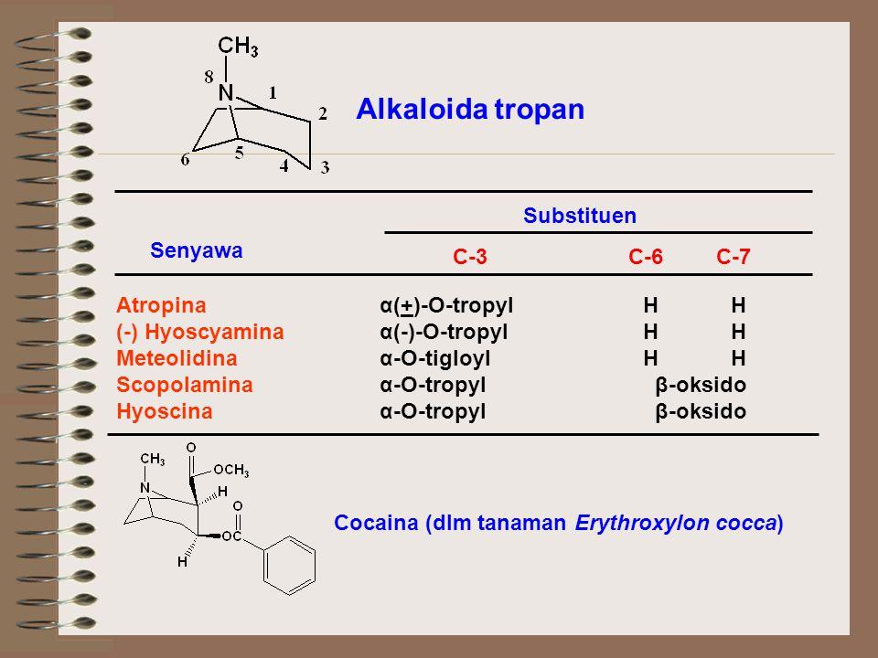 Alkaloida tropan Substituen C-3C-6C-7 Senyawa Atropina α(+)-O-tropylHH (-) Hyoscyaminaα(-)-O-tropylHH Meteolidinaα-O-tigloylHH Scopolaminaα-O-tropyl β-oksido Hyoscinaα-O-tropyl β-oksido Cocaina (dlm tanaman Erythroxylon cocca)