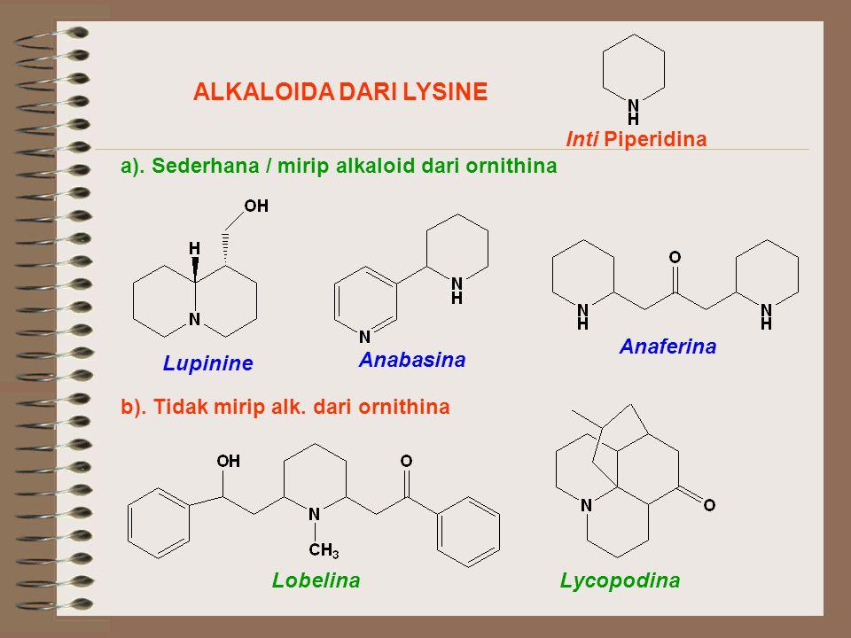 ALKALOIDA DARI LYSINE Inti Piperidina a).Sederhana / mirip alkaloid dari ornithina b).