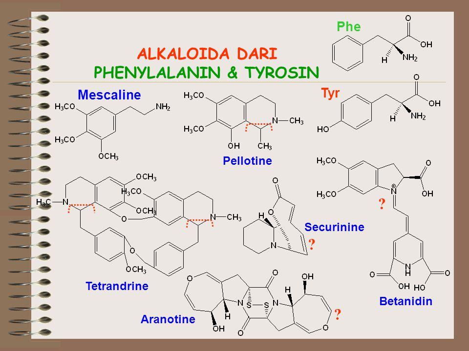 ALKALOIDA DARI PHENYLALANIN & TYROSIN Phe Tyr Mescaline Pellotine Betanidin Aranotine Tetrandrine Securinine .