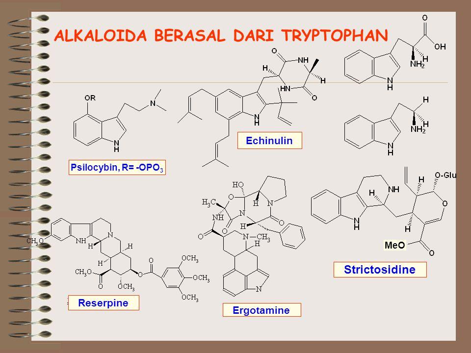 ALKALOIDA BERASAL DARI TRYPTOPHAN Psilocybin, R= -OPO 3 Echinulin Reserpine Ergotamine MeO Strictosidine