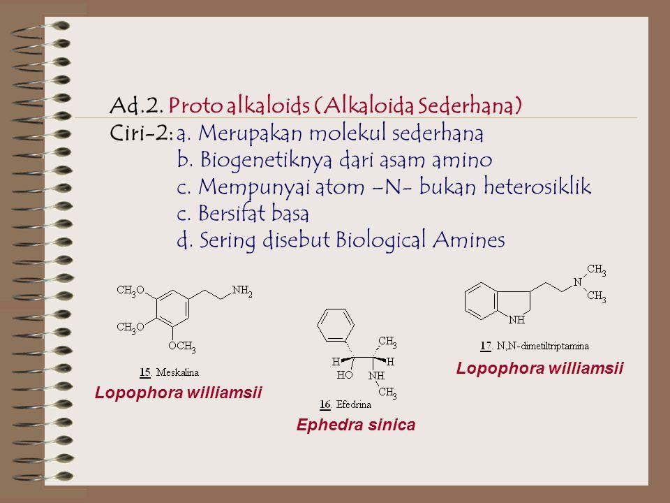 Ad.2.Proto alkaloids (Alkaloida Sederhana) Ciri-2:a.