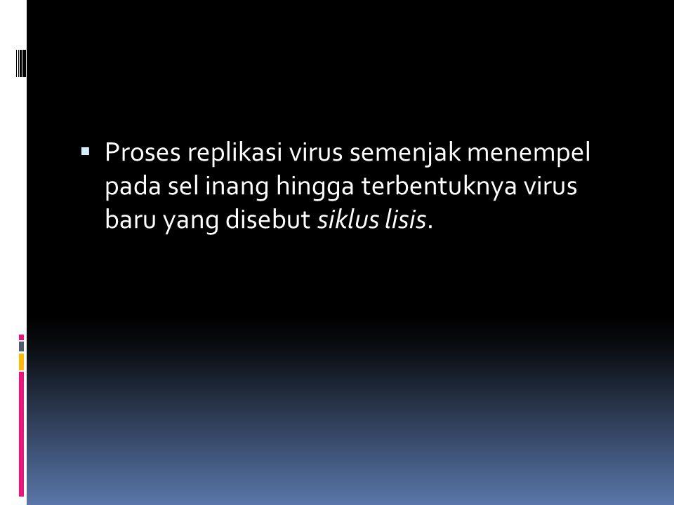  Proses replikasi virus semenjak menempel pada sel inang hingga terbentuknya virus baru yang disebut siklus lisis.