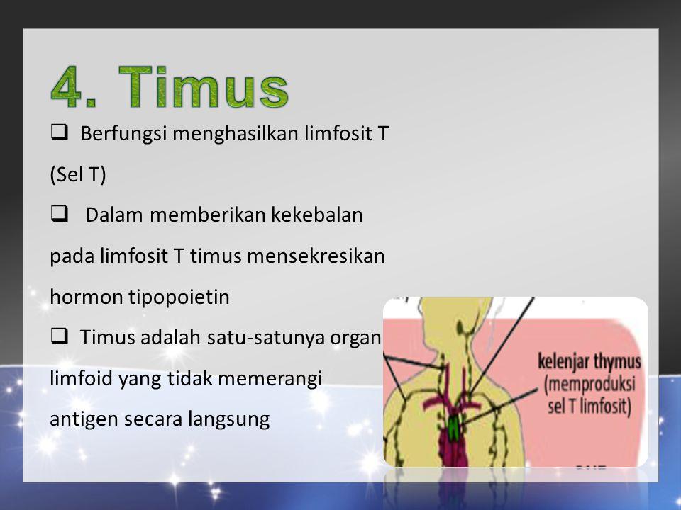  Berfungsi menghasilkan limfosit T (Sel T)  Dalam memberikan kekebalan pada limfosit T timus mensekresikan hormon tipopoietin  Timus adalah satu-satunya organ limfoid yang tidak memerangi antigen secara langsung