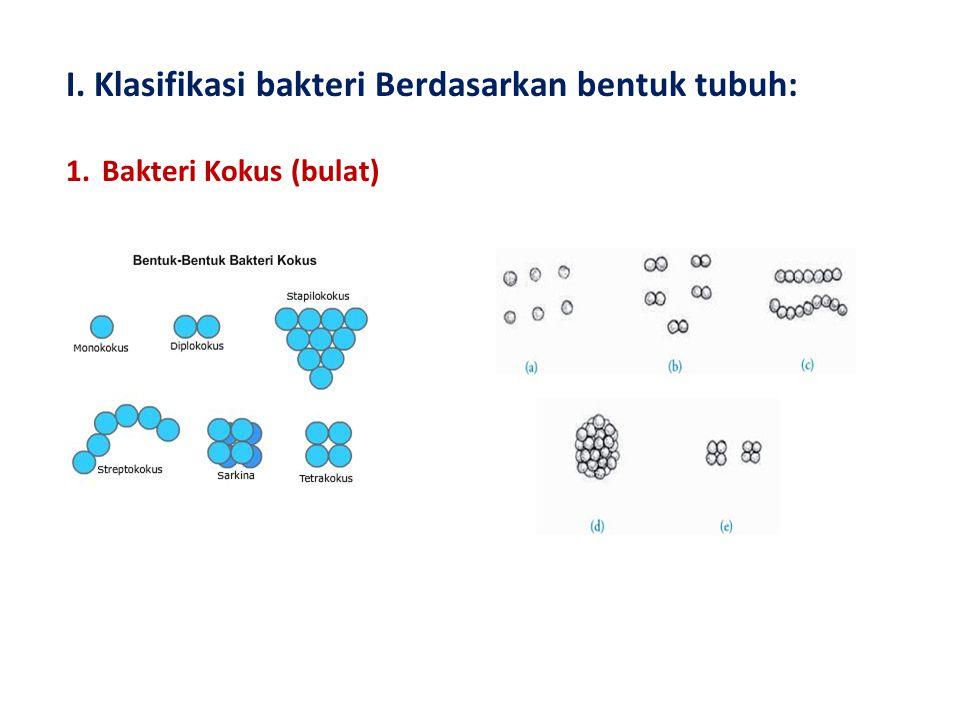 I. Klasifikasi bakteri Berdasarkan bentuk tubuh: 1.Bakteri Kokus (bulat)
