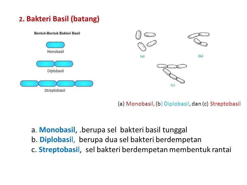2. Bakteri Basil (batang) (a) Monobasil, (b) Diplobasil, dan (c) Streptobasil a. Monobasil,.berupa sel bakteri basil tunggal b. Diplobasil, berupa dua