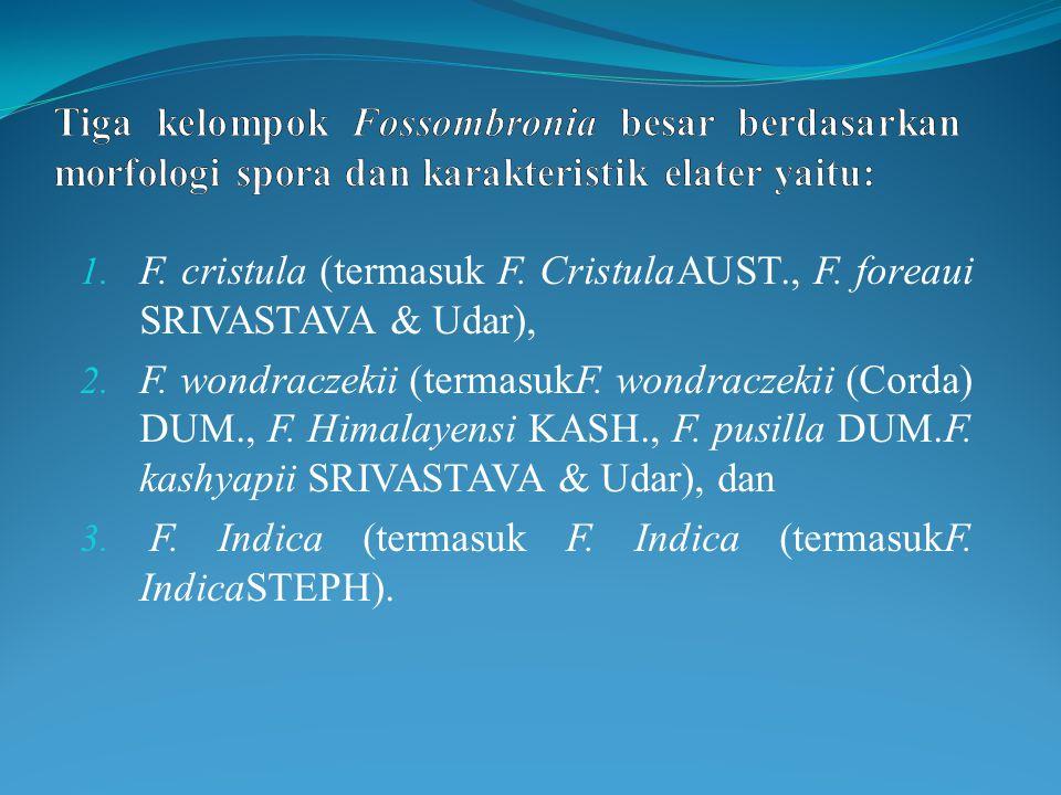 1. F. cristula (termasuk F. CristulaAUST., F. foreaui SRIVASTAVA & Udar), 2.
