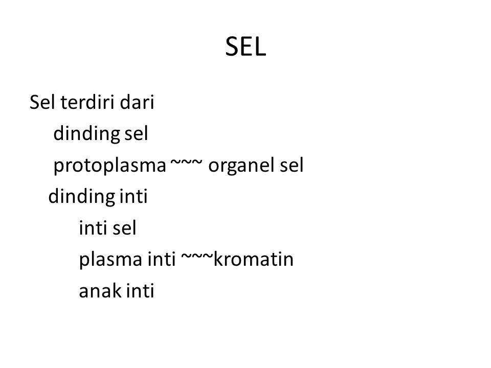 SEL Sel terdiri dari dinding sel protoplasma ~~~ organel sel dinding inti inti sel plasma inti ~~~kromatin anak inti