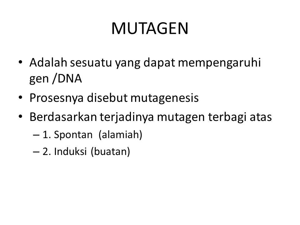 MUTAGEN Adalah sesuatu yang dapat mempengaruhi gen /DNA Prosesnya disebut mutagenesis Berdasarkan terjadinya mutagen terbagi atas – 1. Spontan (alamia