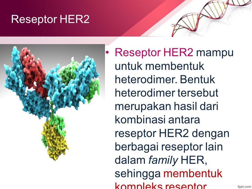 Reseptor HER2 mampu untuk membentuk heterodimer.