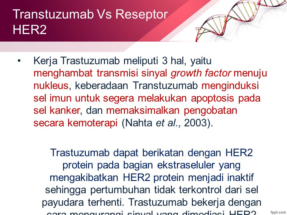 Kerja Trastuzumab meliputi 3 hal, yaitu menghambat transmisi sinyal growth factor menuju nukleus, keberadaan Transtuzumab menginduksi sel imun untuk segera melakukan apoptosis pada sel kanker, dan memaksimalkan pengobatan secara kemoterapi (Nahta et al., 2003).