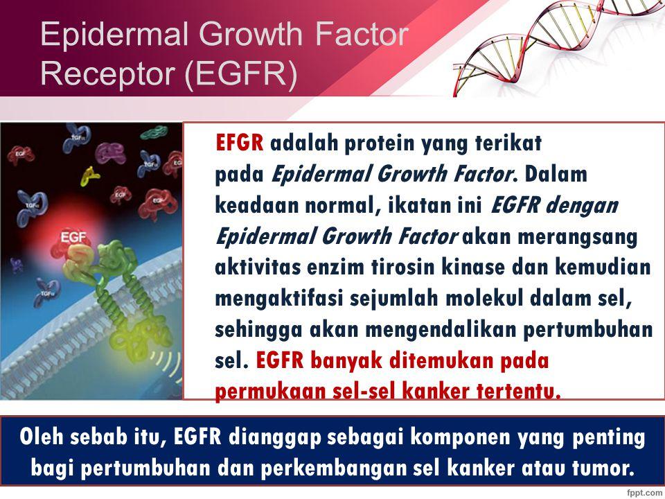 Epidermal Growth Factor Receptor (EGFR) EFGR adalah protein yang terikat pada Epidermal Growth Factor.