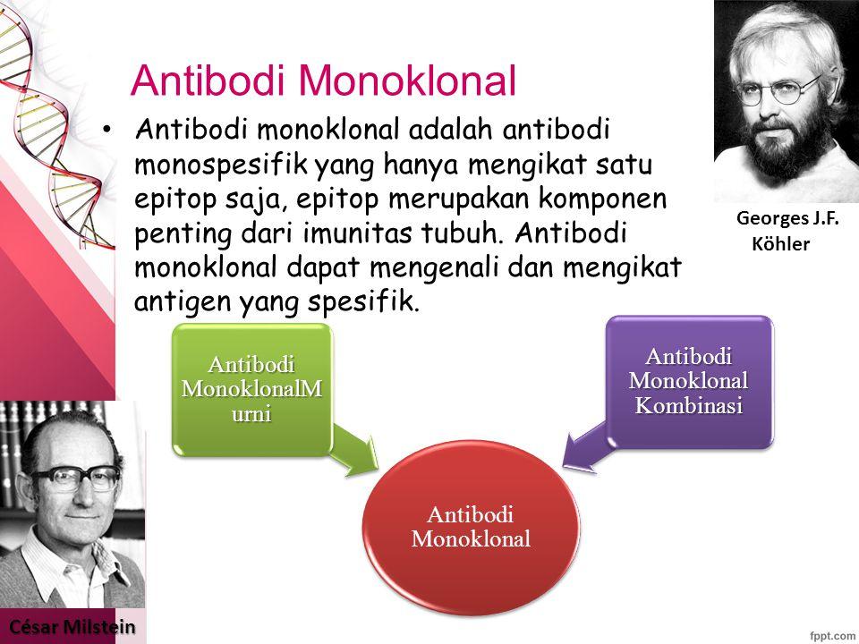 Antibodi Monoklonal Antibodi monoklonal adalah antibodi monospesifik yang hanya mengikat satu epitop saja, epitop merupakan komponen penting dari imunitas tubuh.