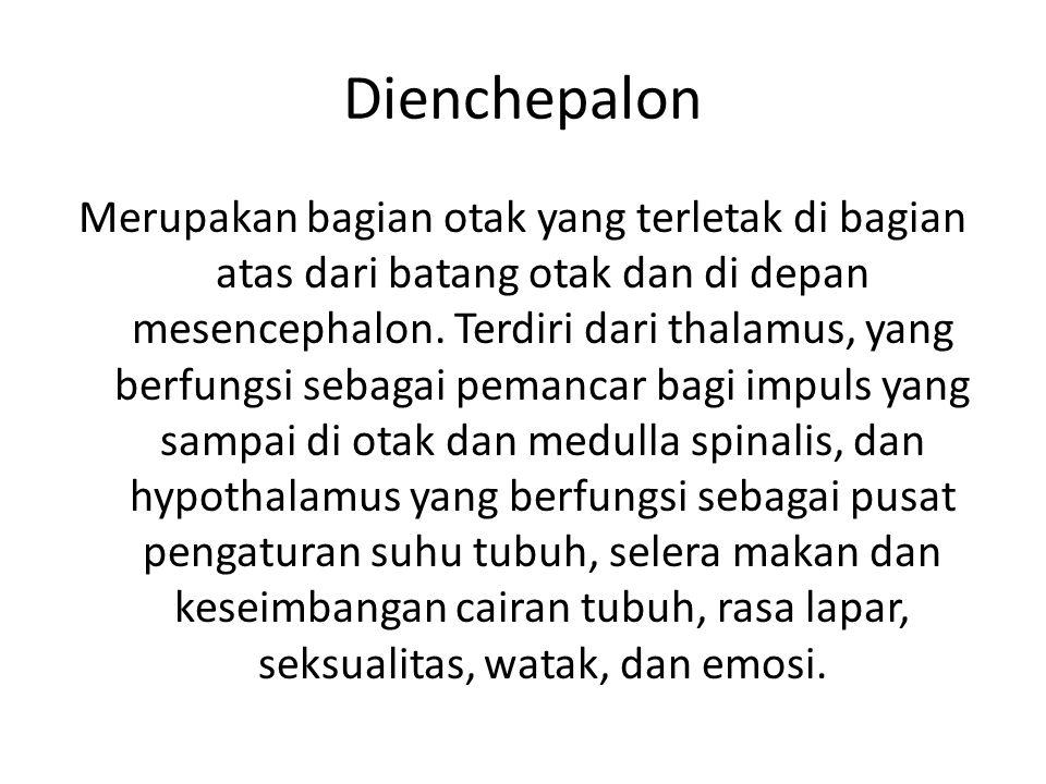 Dienchepalon Merupakan bagian otak yang terletak di bagian atas dari batang otak dan di depan mesencephalon. Terdiri dari thalamus, yang berfungsi seb