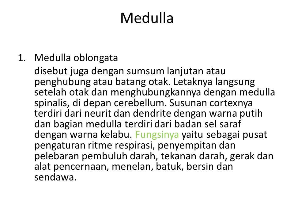 Medulla 1.Medulla oblongata disebut juga dengan sumsum lanjutan atau penghubung atau batang otak. Letaknya langsung setelah otak dan menghubungkannya