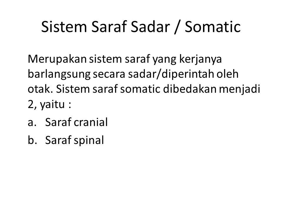 Sistem Saraf Sadar / Somatic Merupakan sistem saraf yang kerjanya barlangsung secara sadar/diperintah oleh otak. Sistem saraf somatic dibedakan menjad