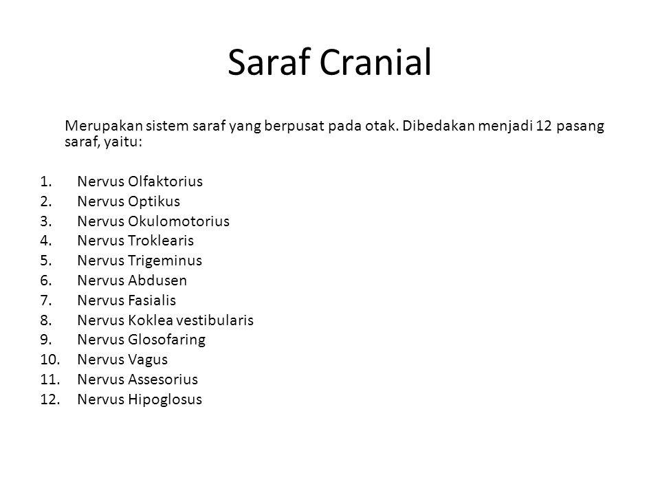 Saraf Cranial Merupakan sistem saraf yang berpusat pada otak. Dibedakan menjadi 12 pasang saraf, yaitu: 1.Nervus Olfaktorius 2.Nervus Optikus 3.Nervus
