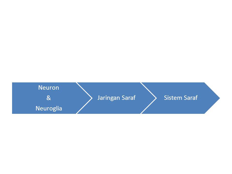 Neuron & Neuroglia Jaringan SarafSistem Saraf