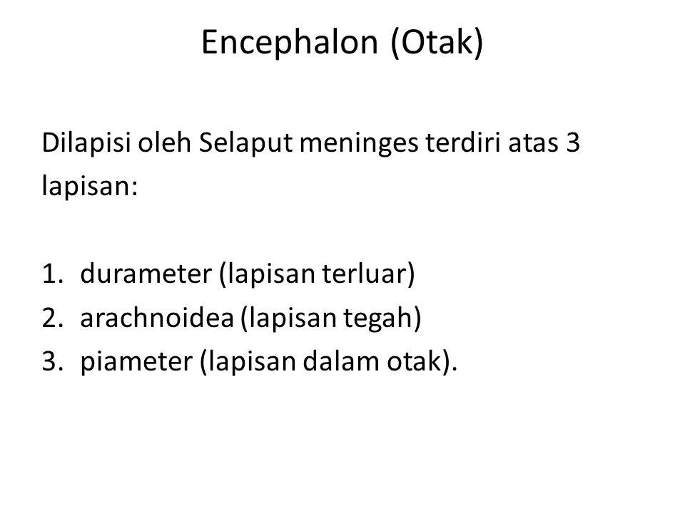 Encephalon (Otak) Dilapisi oleh Selaput meninges terdiri atas 3 lapisan: 1.durameter (lapisan terluar) 2.arachnoidea (lapisan tegah) 3.piameter (lapis