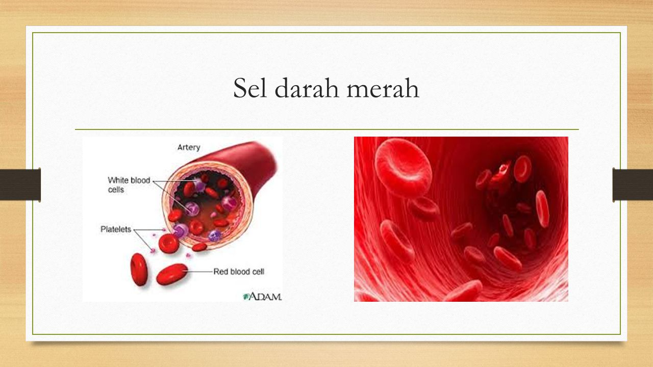 Sel darah putih