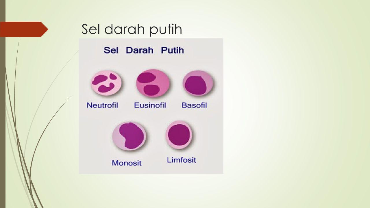 Skema pembekuan darah :