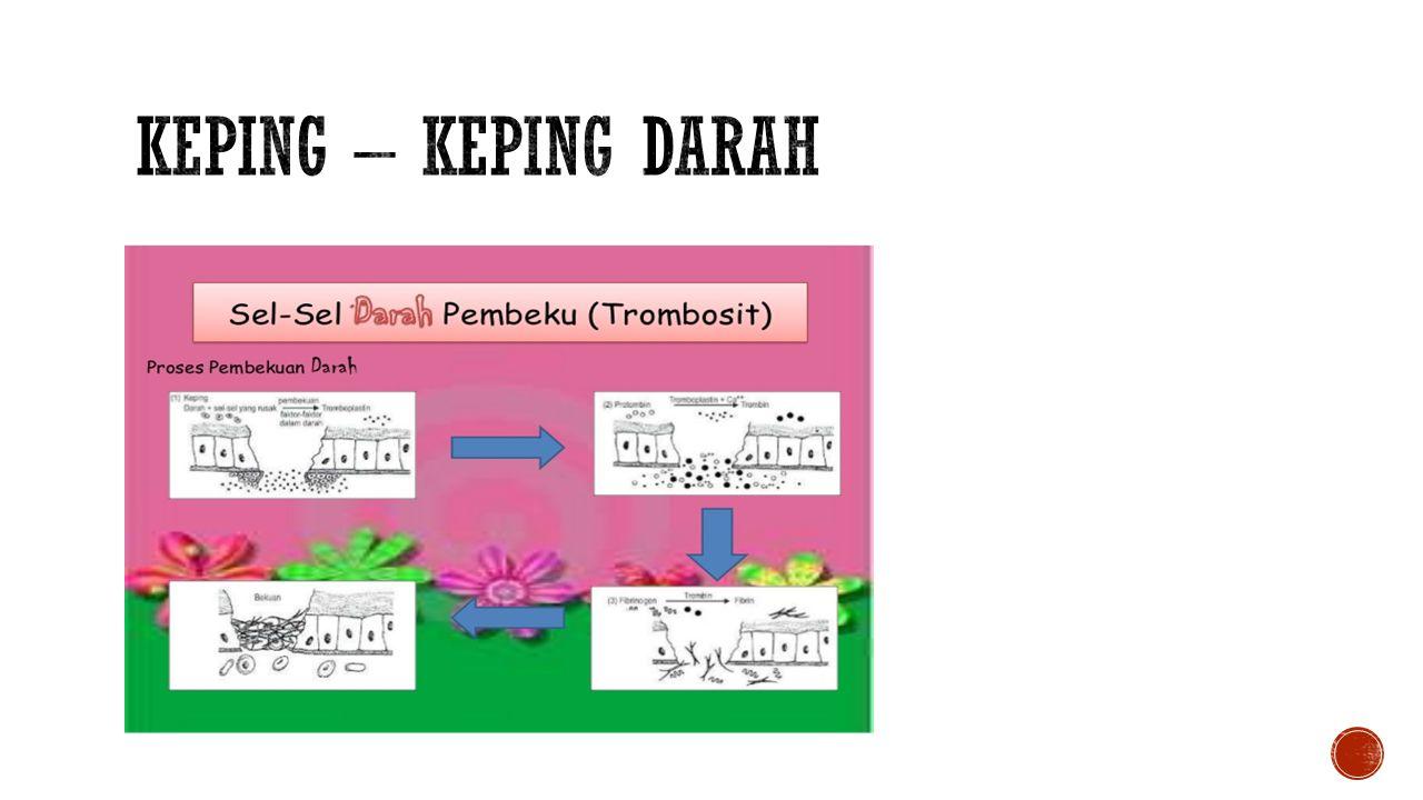 FAKTOR FAKTOR PEMBEKUAN DARAH Fibrinogen Prothrombin Jaringan Tromboplastin Kalsium Proconvertin Antihemophilic faktor Tromboplastin Plasma komponen Hageman faktor