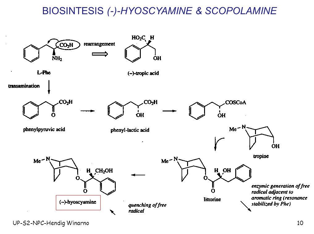 UP-S2-NPC-Hendig Winarno10 BIOSINTESIS (-)-HYOSCYAMINE & SCOPOLAMINE