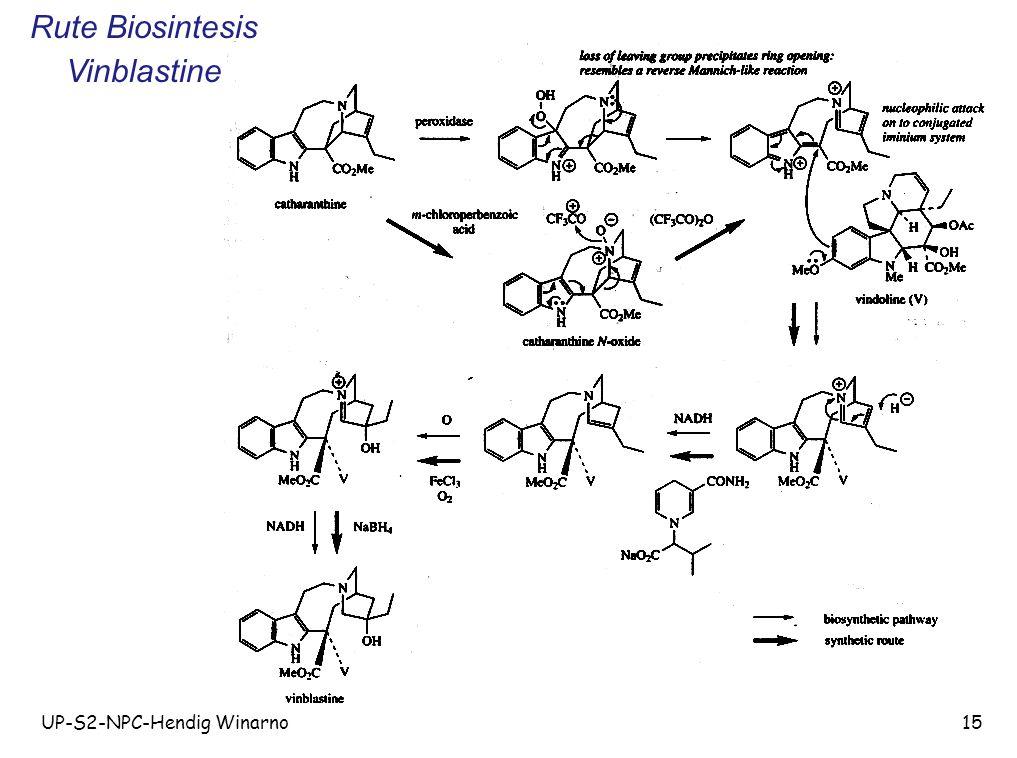 UP-S2-NPC-Hendig Winarno15 Rute Biosintesis Vinblastine