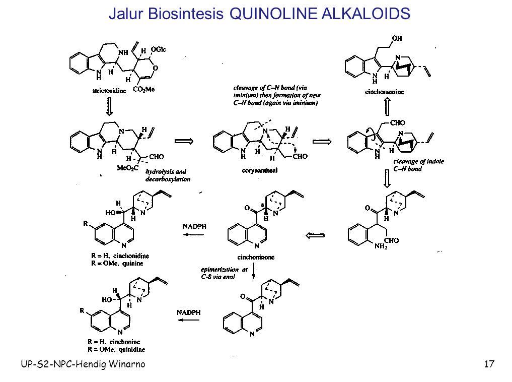 UP-S2-NPC-Hendig Winarno17 Jalur Biosintesis QUINOLINE ALKALOIDS