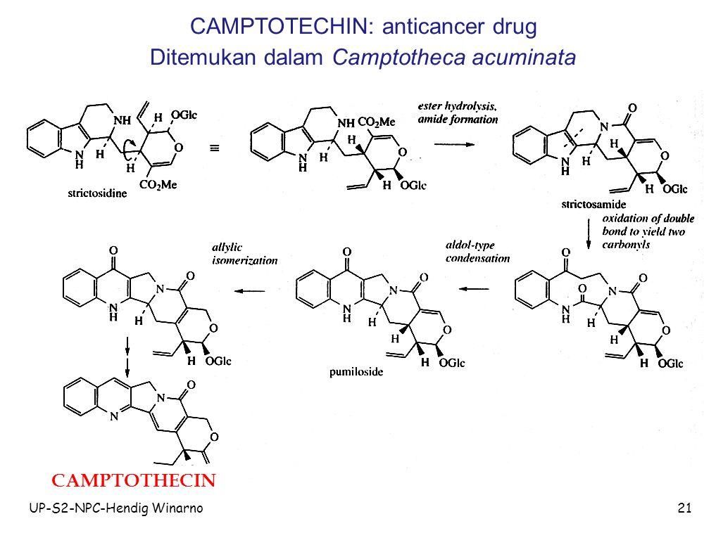 UP-S2-NPC-Hendig Winarno21 CAMPTOTECHIN: anticancer drug Ditemukan dalam Camptotheca acuminata CAMPTOTHECIN