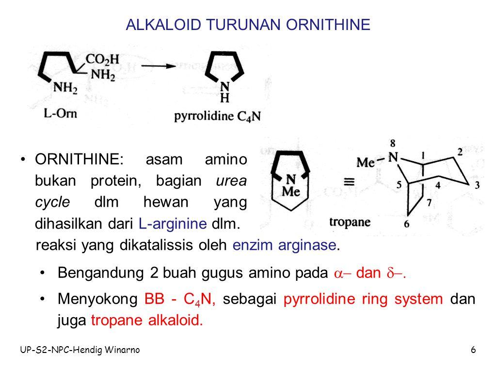 UP-S2-NPC-Hendig Winarno6 ALKALOID TURUNAN ORNITHINE Bengandung 2 buah gugus amino pada  dan  Menyokong BB - C 4 N, sebagai pyrrolidine ring syst