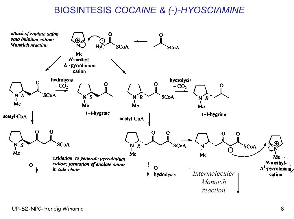 UP-S2-NPC-Hendig Winarno8 BIOSINTESIS COCAINE & (-)-HYOSCIAMINE Intermoleculer Mannich reaction