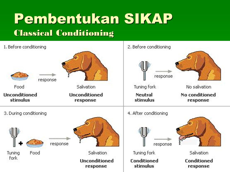 Pembentukan SIKAP Classical Conditioning