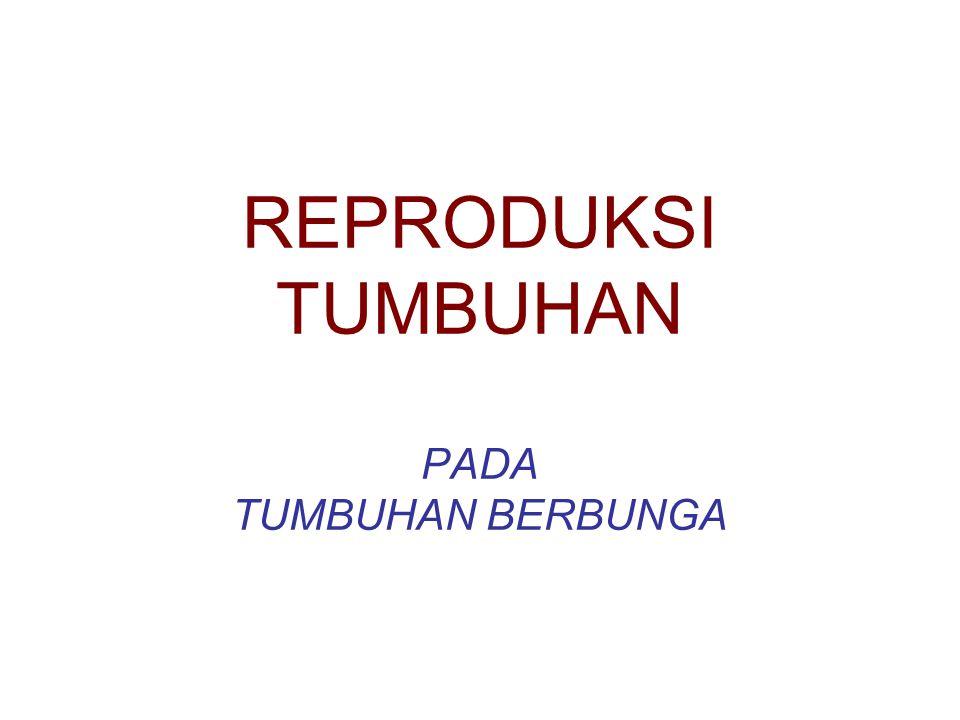 REPRODUKSI TUMBUHAN PADA TUMBUHAN BERBUNGA