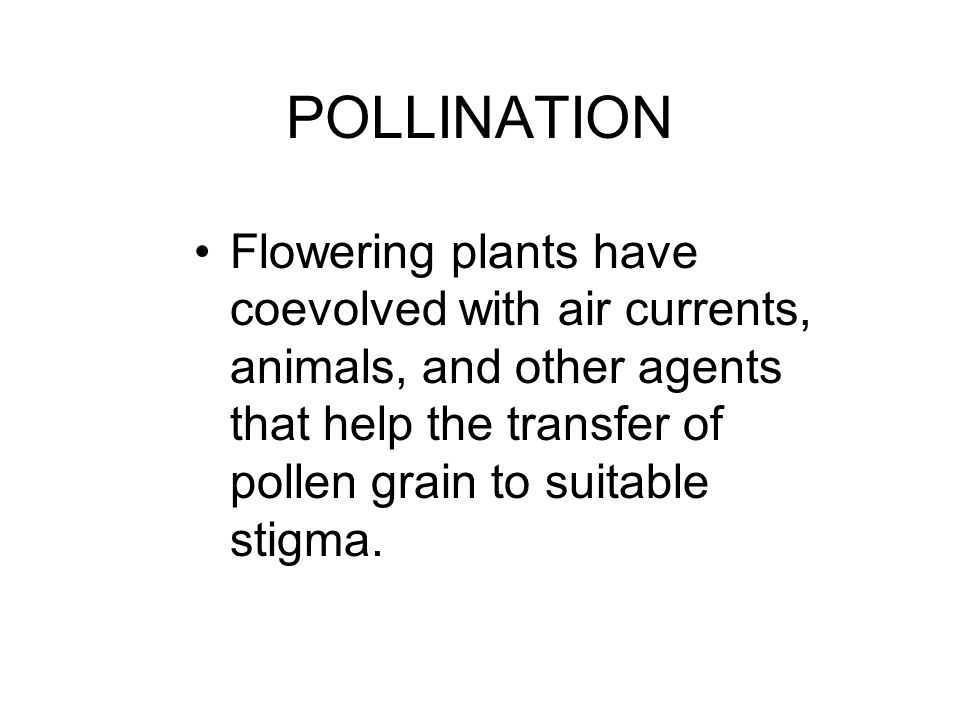 POLLINATION Flowering plants have coevolved with air currents, animals, and other agents that help the transfer of pollen grain to suitable stigma.