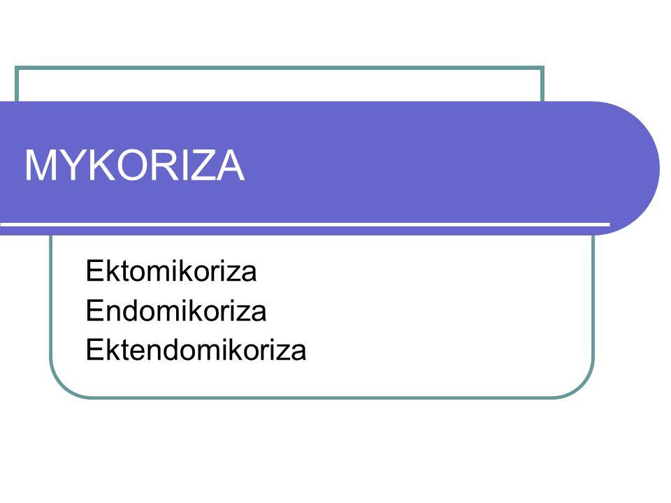 MYKORIZA Ektomikoriza Endomikoriza Ektendomikoriza