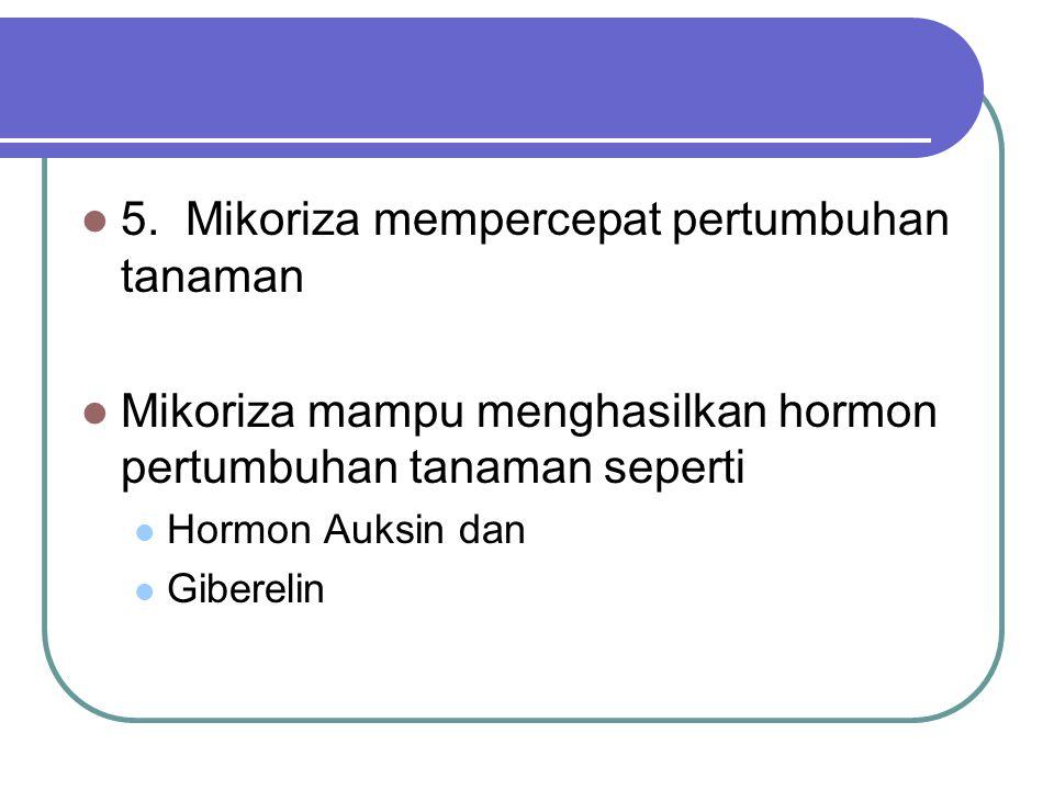 5. Mikoriza mempercepat pertumbuhan tanaman Mikoriza mampu menghasilkan hormon pertumbuhan tanaman seperti Hormon Auksin dan Giberelin