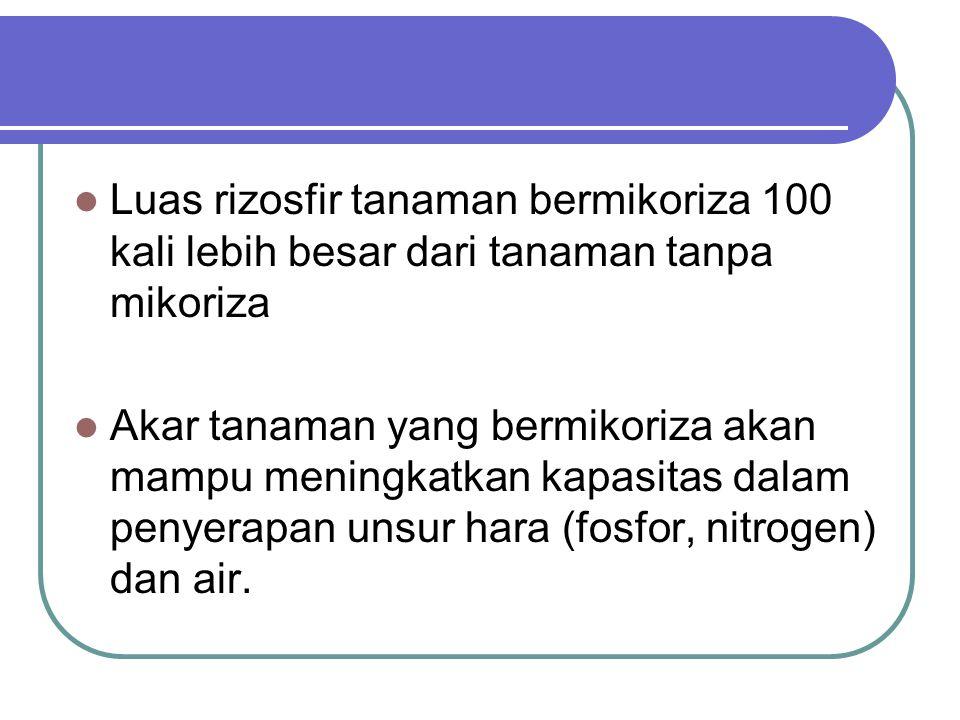 Pupuk Hayati / biofertilizer Mikoriza merupakan makhluk hidup yang berasosiasi dengan akar, dan mampu menyuplai unsur hara dan air terhadap tanaman maka mikoriza disebut sebagai pupuk hayati/biofertilizer Pemberian pupuk hayati cukup dilakukan sekali seumur tanaman, karena jamur akan memperbanyak diri dalam akar tanaman