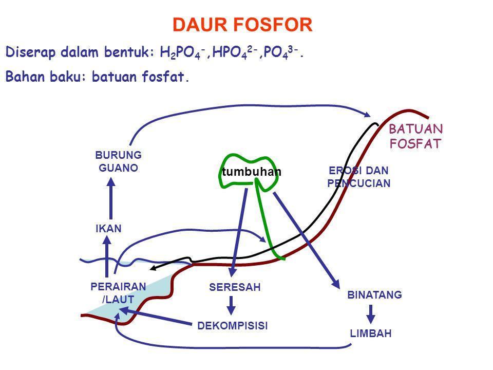 DAUR FOSFOR BATUAN FOSFAT EROSI DAN PENCUCIAN PERAIRAN /LAUT BINATANG SERESAH LIMBAH DEKOMPISISI IKAN BURUNG GUANO tumbuhan Diserap dalam bentuk: H 2 PO 4 -,HPO 4 2-,PO 4 3-.