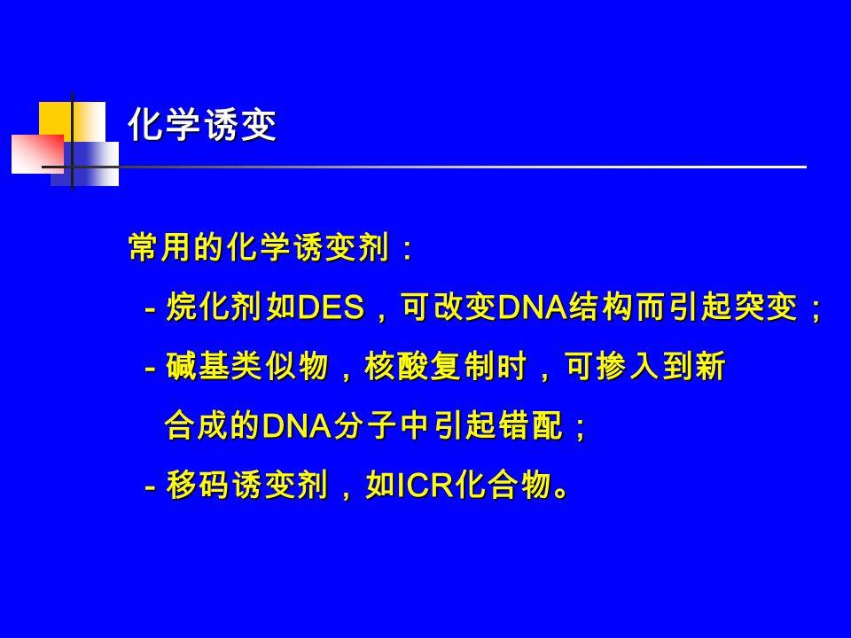化学诱变常用的化学诱变剂: - 烷化剂如 DES ,可改变 DNA 结构而引起突变; - 烷化剂如 DES ,可改变 DNA 结构而引起突变; - 碱基类似物,核酸复制时,可掺入到新 - 碱基类似物,核酸复制时,可掺入到新 合成的 DNA 分子中引起错配; 合成的 DNA 分子中引起错配; - 移码