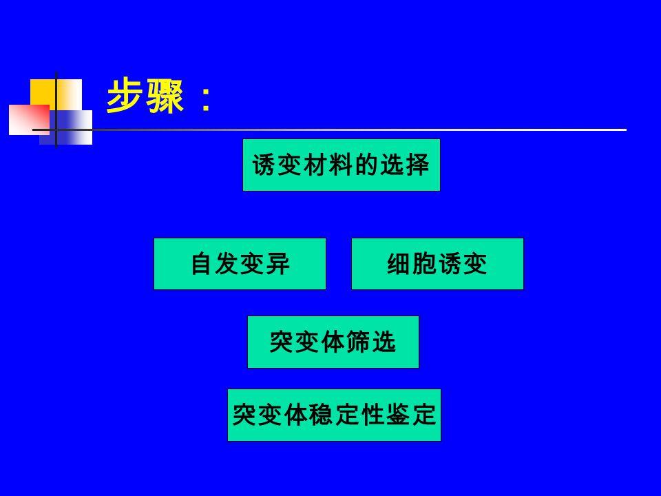 步骤: 诱变材料的选择 突变体筛选 细胞诱变自发变异 突变体稳定性鉴定