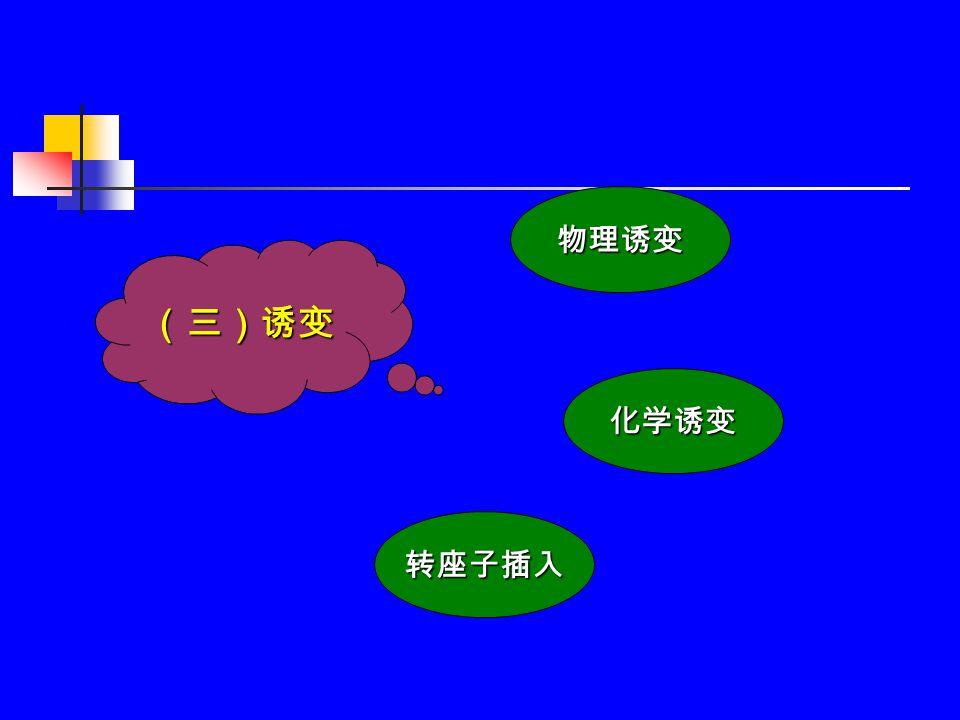 二、培养基 — 激素 培养基激素浓度和不同激素配比对再生植 株的染色体倍性有一定的影响。 培养基激素浓度和不同激素配比对再生植 株的染色体倍性有一定的影响。 激素引起的变异大多为倍性增加。 激素引起的变异大多为倍性增加。 少数情况下激素引起类减数分裂而使倍性 减少。 少数情况下激素引起类减数分裂而使倍性 减少。