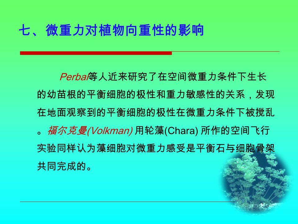 七、微重力对植物向重性的影响 Perbal 等人近来研究了在空间微重力条件下生长 的幼苗根的平衡细胞的极性和重力敏感性的关系,发现 在地面观察到的平衡细胞的极性在微重力条件下被搅乱 。福尔克曼 (Volkman) 用轮藻 (Chara) 所作的空间飞行 实验同样认为藻细胞对微重力感受是平衡石与细胞骨架 共同完成的。