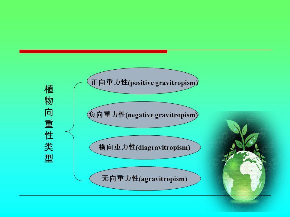 植物向重性类型植物向重性类型 正向重力性 (positive gravitropism) 负向重力性 (negative gravitropism) 无向重力性 (agravitropism) 横向重力性 (diagravitropism)