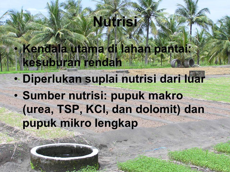 Nutrisi Kendala utama di lahan pantai: kesuburan rendah Diperlukan suplai nutrisi dari luar Sumber nutrisi: pupuk makro (urea, TSP, KCl, dan dolomit)
