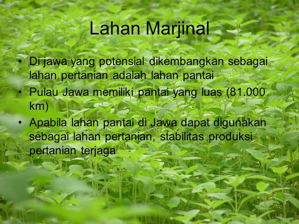 Lahan Marjinal Di jawa yang potensial dikembangkan sebagai lahan pertanian adalah lahan pantai Pulau Jawa memiliki pantai yang luas (81.000 km) Apabil